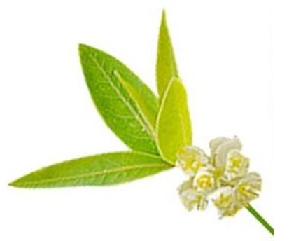 Fleur de Litsée Citronnée