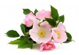 Bienfaits de l'Huile de Rose Musquée : une huile anti-âge régénérante et réparatrice